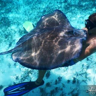 Underwater Fun with Stingrays