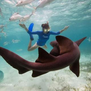 Kate dances with Nurse Sharks & Sting Rays at Hol Chan Marine Reserve