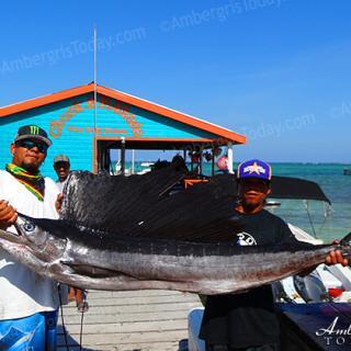 Sailfish, fishing in San Pedro, Ambergris Caye, Belize
