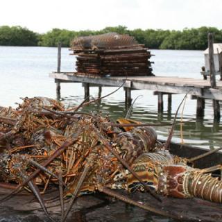 Lobster Season Is Here!