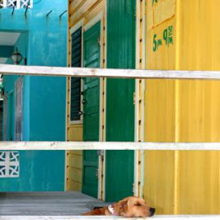 Dog relaxing on a Sunday morning at Caye Caulker