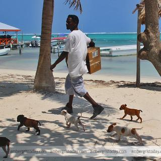 Walking Dogs on the beach, puppies for sale
