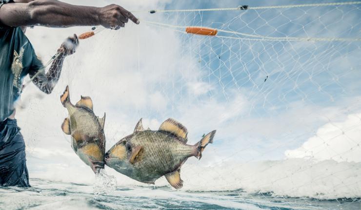 Belize Struggling With Battle Against Gillnet Fishing