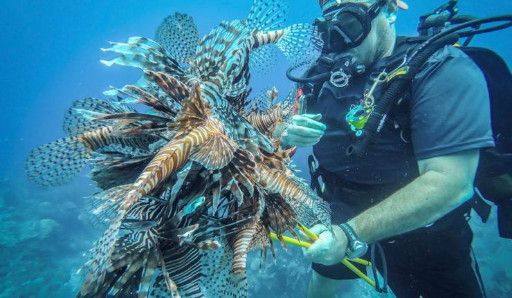Slaying Lionfish in Belize - Douglas McLain