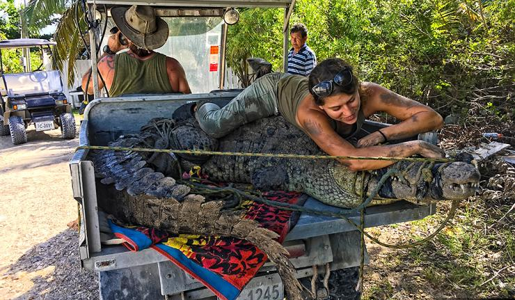ACES Crocodile Hunters Capture and Release 11-foot Beast